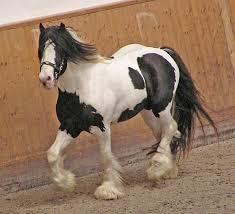american paint horse patterns best horse 2017