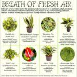 top house plants good indoor plants the top house plants that clean the air best