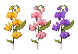 sweet pea flowers sweet pea flower vectors free vector stock