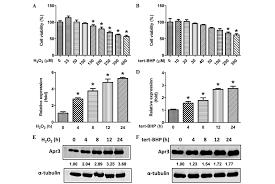 apr3 accelerates the senescence of human retinal pigment
