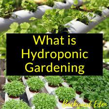 what is hydroponic gardening backyard eden