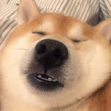 Shiba Inus Meme - shiba inu meme 100 images shiba inu dog doge meme spitz free