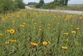 salina ks sunflower field by kansas state university audubon of kansas executive director to present at kansas wesleyan