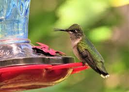 hummingbird flowers plants that attract hummingbirds the farmer s almanac