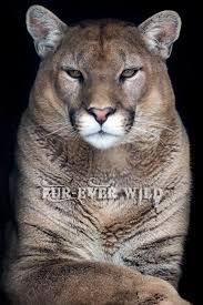 Minnesota wild animals images Fureverwild jpg