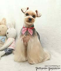 joypia yorkshire haircuts resultado de imagen de asian fusion style groomer all lovely