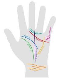 schmerzen in der handfläche die besten 25 reflexzonen ideen auf druckpunkte