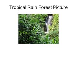 Dominant Plants Of The Tropical Rainforest - biomes group of ecosystems that have the same climate and dominant