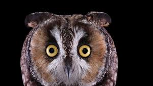 white owl 2 wallpapers wallpapers tagged with owl close up creepy owl flight bird on a