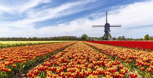 flower garden in amsterdam 20 holland flower garden weekly flower update week 11