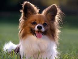 Types Of Dogs Types Of Small Dogs With Pictures Dog Pet Photos Gallery