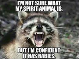 Racoon Meme - raccoon meme i m not sure who my spirit animal is yahoo image