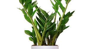 house plants no light best low light houseplants sunset