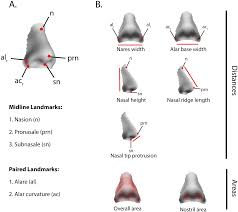 investigating the case of human nose shape and climate adaptation