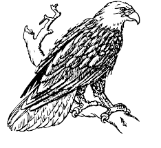 file bald eagle 001 png the work of god u0027s children