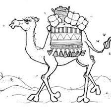 coloring page camel face kids drawing and coloring pages marisa