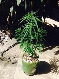 home design magazine in philippines home grow in philippines first time grower