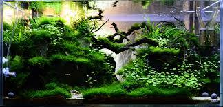 213 best aquarium landscape s images on pinterest aquarium ideas