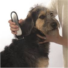 afghan hound harga amazon com wahl lithium ion pro series cordless dog clippers