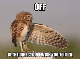 Owl Memes - listen to this owl meme xyz