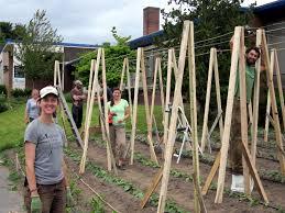 becky u0027s farming blog a year of growing on bainbridge island