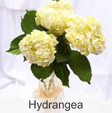 Bulk Flowers Frans U0027 Flowers Bulk Flower Orders