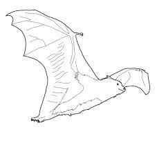 bat coloring pages 2 coloring page