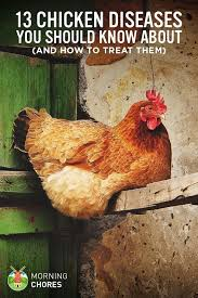 How To Raise Backyard Chickens For Eggs Best 25 Raising Chickens Ideas On Pinterest Backyard Chickens