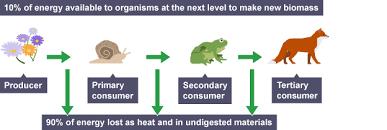 bbc bitesize national 5 biology energy in ecosystems revision 1