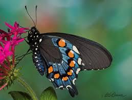 calendar of events sarasota county butterfly club