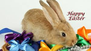 easter easter bunny happy easter bunny images background hd wallpaper adewale