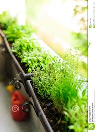 balcony herb garden royalty free stock photos image 21381338