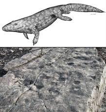 oldest land walker tracks found pushes back evolution
