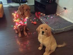 christmas spirit imgur