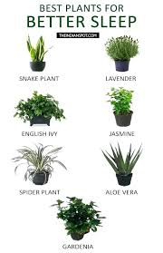 best indoor plants for low light great indoor plants best indoor plants in houseplants that clean the
