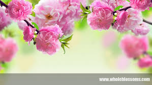 wholesale flowers online the three reasons to buy wholesale flowers online with whole blossoms
