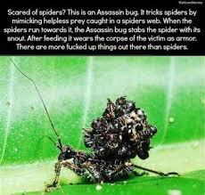 Afraid Of Spiders Meme - th id oip on0jrwqgv4dx7x7qebcjrahahd