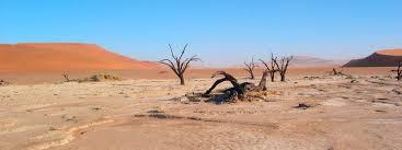 native plants in the desert deserts habitats wwf