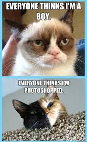Tardar Sauce Meme - grumpy cat is actually a girl cat named tarter sauce cats and