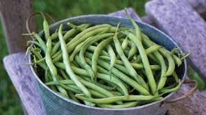 Types Of Garden Beans - vegetable seeds u0026 plants tomato pepper bean organic heirloom