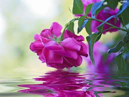 www flowers reflection water purple flowers wallpapers 2048x1535
