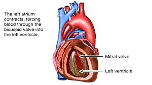 Heart Anatomy And Function How The Heart Works Animation Learn Heart Anatomy Vessels