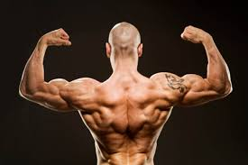v shaped get the v shaped body you ve always wanted bodybuilding
