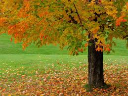 autumn background powerpoint backgrounds for free powerpoint