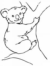 koala coloring pages lezardufeu com