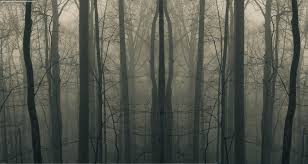 creepy stories from the woods ghosts and ghouls