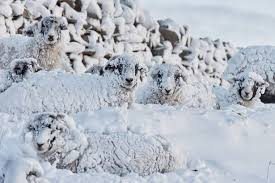 Snow Scotland Uk Weather Scotland Set For A Fortnight Of Snow And 70mph Winds