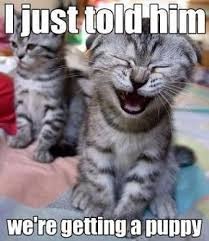 Funny Kitten Meme - cute funny kittens memes puppies image 2334034 by