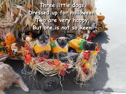 poems for boys and girls three little dogs which way now 101