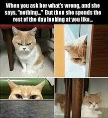 Stupid Cat Meme - stupid cat pics and then some home facebook